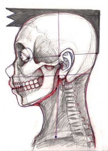suneo skeleton